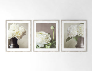 Lisa Russo Fine Art Nature Photography Ivory Shabby Chic Botanicals • Set of 3
