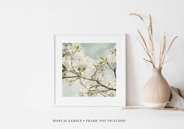 Delicate in White <br>Floral Photograph