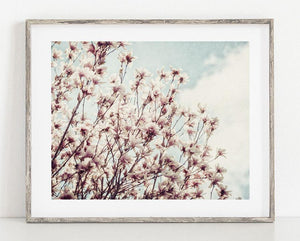 Lisa Russo Fine Art Nature Photography Pink Dogwood <br>Floral Nature Photography