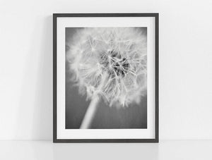 Lisa Russo Fine Art Nature Photography Rustic Dandelion <br>Black and White Nature Photography