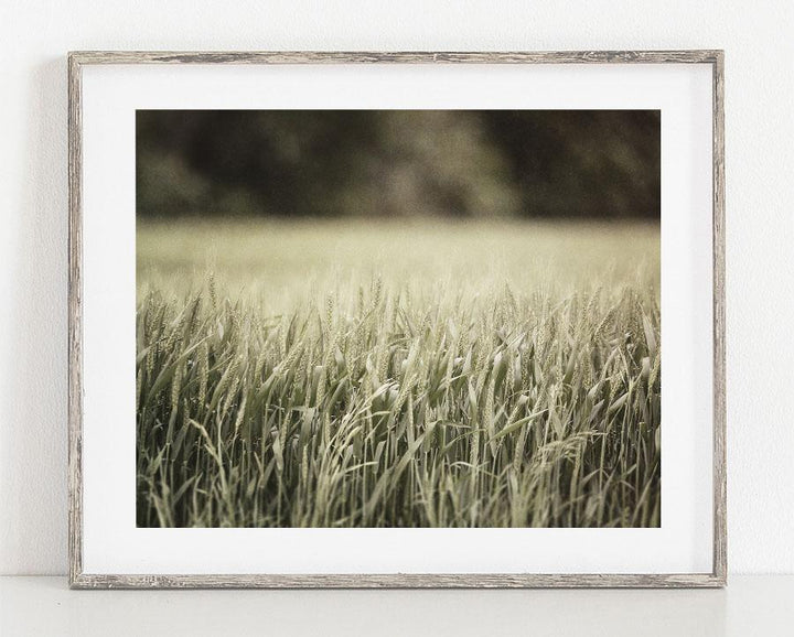 Lisa Russo Fine Art Nature Photography Wheatfield <br>Green Nature Photography