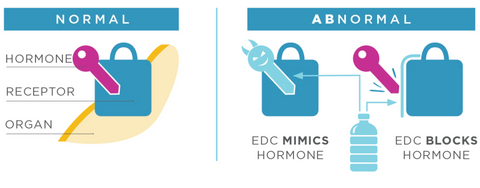 how endocrine disrupting chemicals mimic hormones in the body