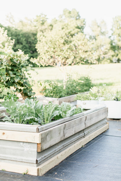 Vegetable Garden & Raised Beds