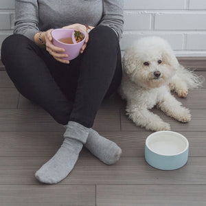 Magisso Pet Water Bowl with dog model