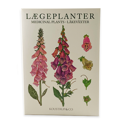 Medicinal Plants Notecards, Pack of 8