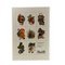 A Taste of Autumn Notecards, Pack of 8