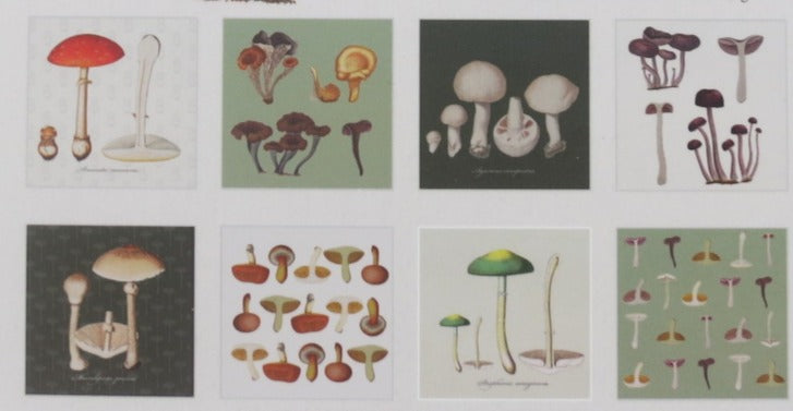 Svampe Mushrooms