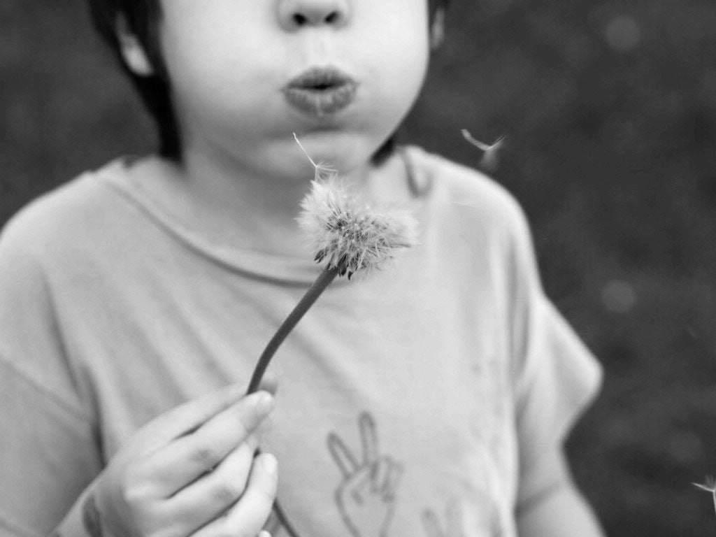 Ingrid's son Teo blowing seeds from a dandelion seed head