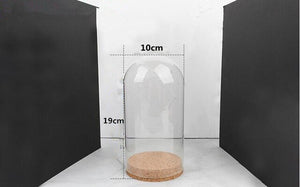 Diameter=10cm Cork Base Cylinder Shape Glass Dome Home Decoration Creative Glass Cover Vase Friend Gift Wedding Decoration