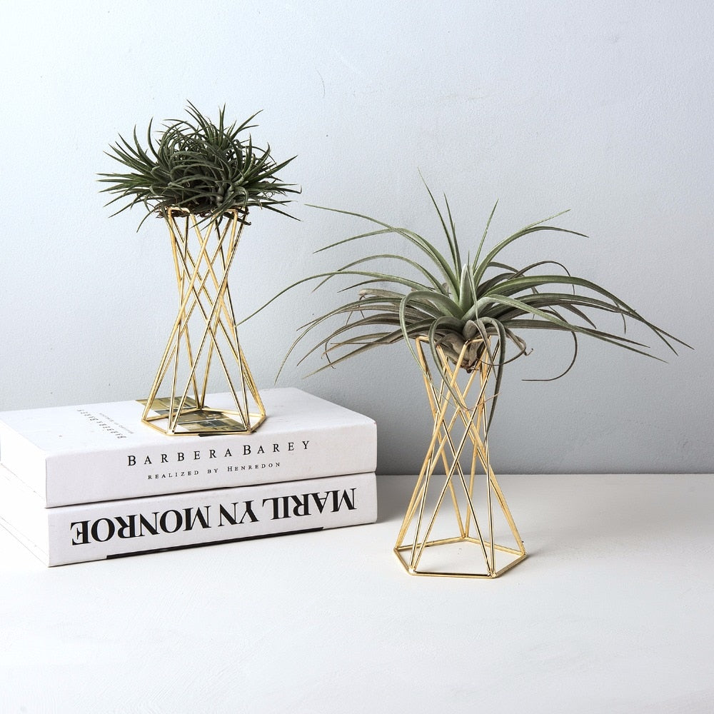 Set of 2 Air Plant Stand Air Plant Holder Tillandsia Holder Air Plant Display Stand Streptophylla Air Plant Stand