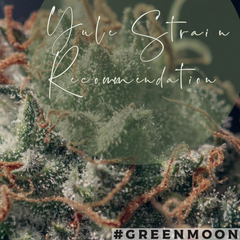 Yule Cannabis Strain Recommendation