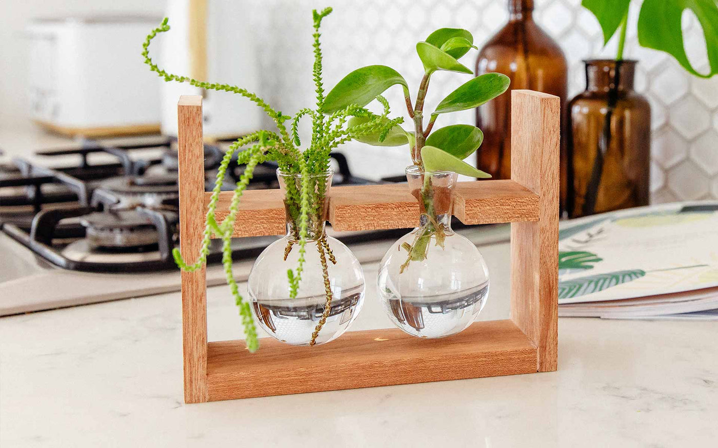 Arwen Propagation Station sitting on a kitchen bench. Propagate plant cuttings in water. Natural timber frame with suspended glass propagation vessels handcrafted in Australia. Free shipping, Afterpay and Apple Pay available.