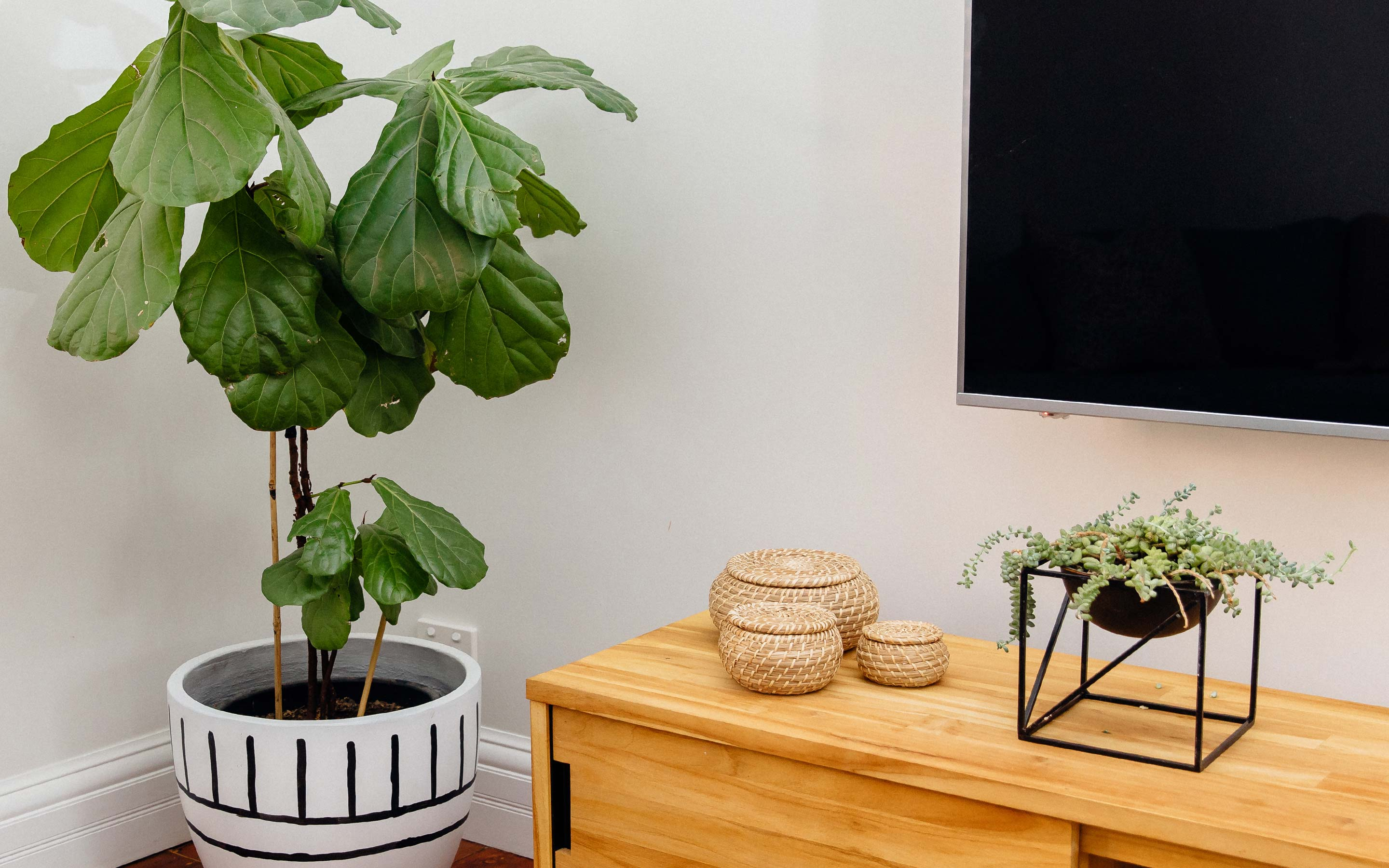 Pot plant sitting in a dark corner of a house. Propagate plant cuttings in water. Natural timber frame with suspended glass propagation vessels handcrafted in Australia. Free shipping, Afterpay and Apple Pay available.