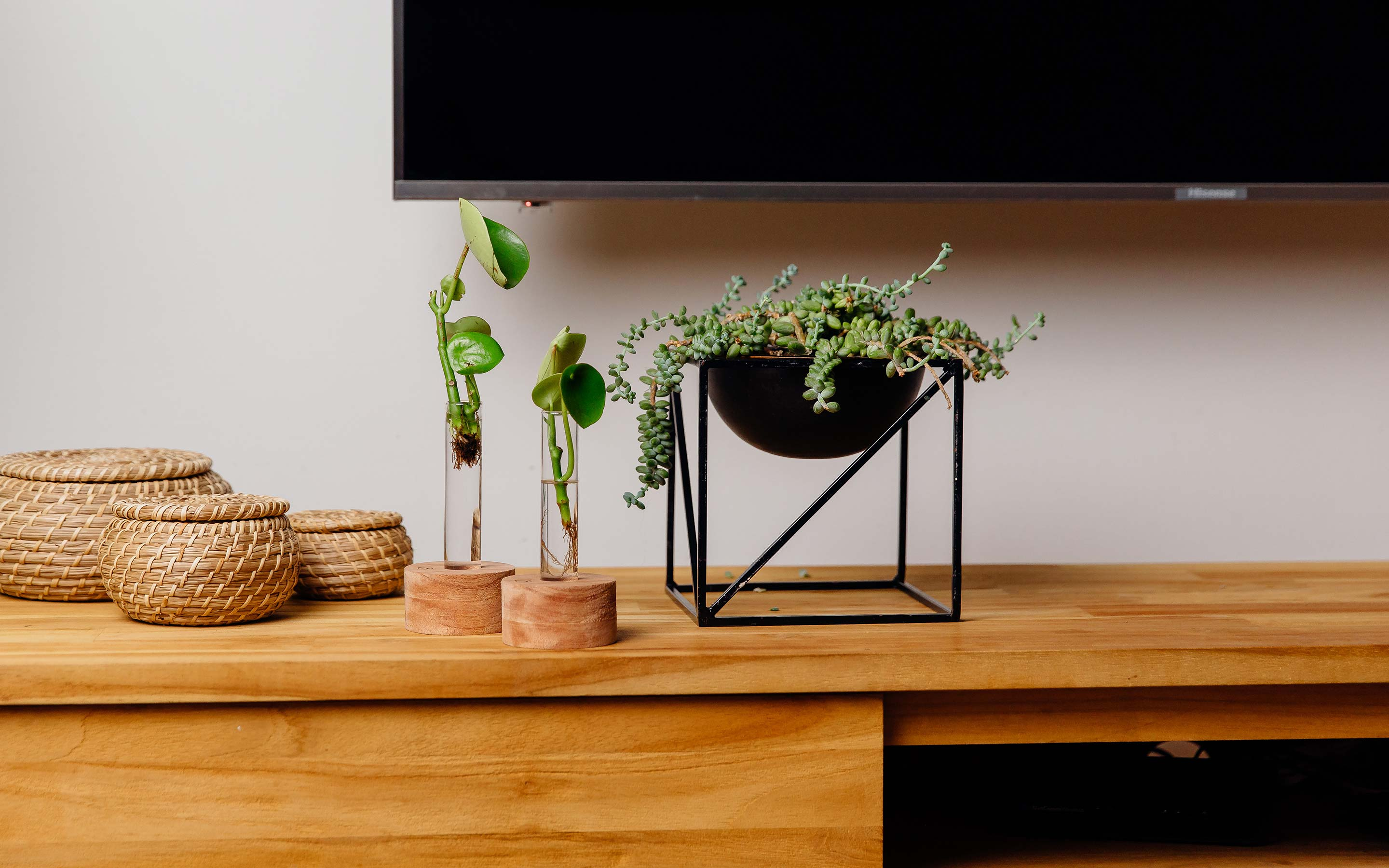 Plants sitting on a brown TV cabinet. Propagate plant cuttings in water. Natural timber frame with suspended glass propagation vessels handcrafted in Australia. Free shipping, Afterpay and Apple Pay available.