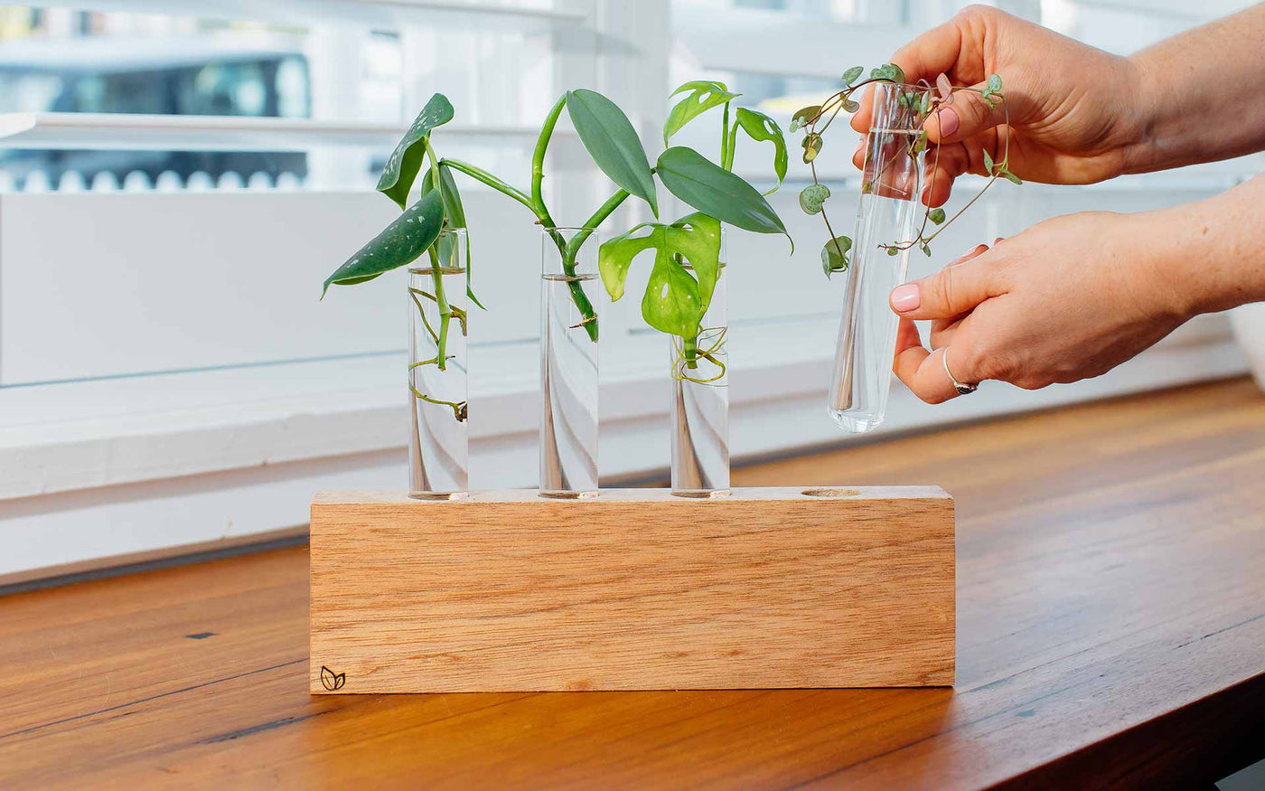Florence Propagation Station by Cooper and Smith. Propagate plant cuttings in water. Natural timber frame with suspended glass propagation vessels handcrafted in Australia. Free shipping, Afterpay and Apple Pay available.