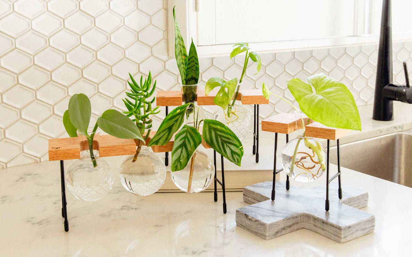 Fleur Propagation Station by Cooper and Smith. Propagate plant cuttings in water. Natural timber frame with suspended glass propagation vessels handcrafted in Australia. Free shipping, Afterpay and Apple Pay available.