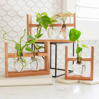 Arwen Propagation Station by Cooper and Smith. Propagate plant cuttings in water. Natural timber frame with suspended glass propagation vessels handcrafted in Australia. Free shipping, Afterpay and Apple Pay available.