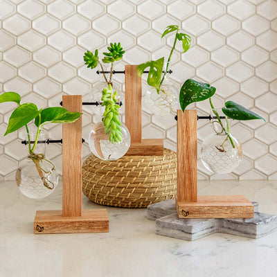 Harper Propagation Station by Cooper and Smith. Propagate plant cuttings in water. Natural timber frame with suspended glass propagation vessels handcrafted in Australia. Free shipping, Afterpay and Apple Pay available.