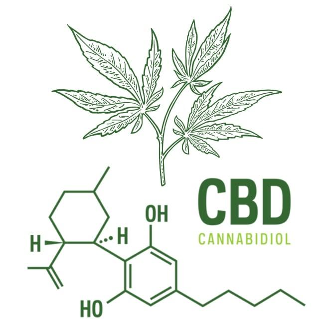 CBD and Exercise: Risks and Benefits