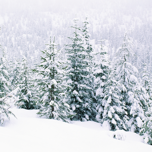 Photos of a mountainside of pine trees covered in snow.