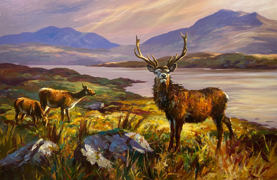 Red Deer Stag in Connemara