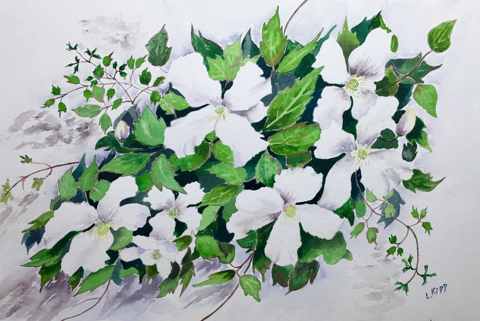 Still Life - White Clematis Original Artwork