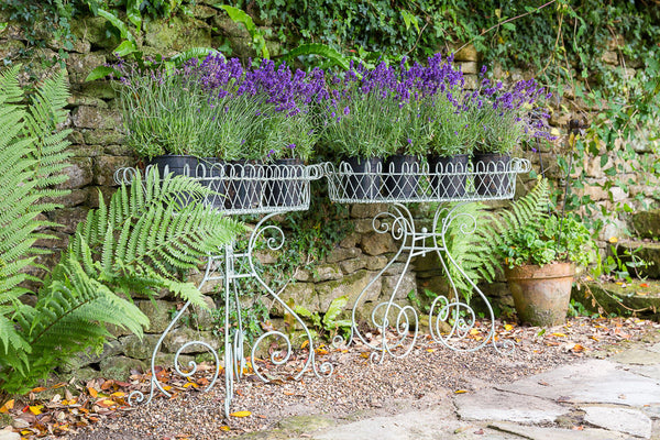 Offbeat Interiors - A Pair of Wirework Plant Stands