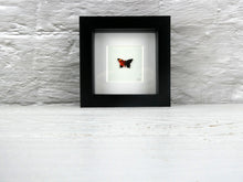Load image into Gallery viewer, One framed butterfly