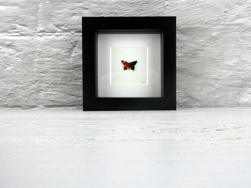 One framed butterfly