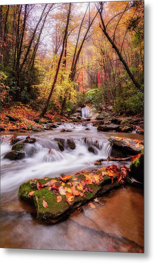 Autumn Glow - Metal Print