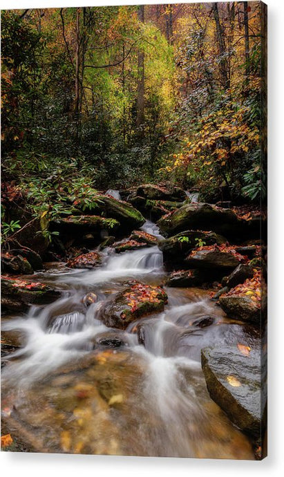 Chestnut Branch Creek - Acrylic Print