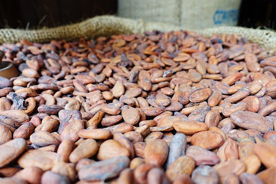 The Science: How Cacao Benefits The Brain & Body