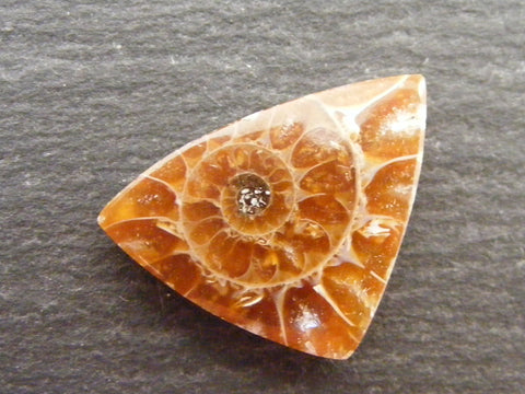 Ammonite Triangular Cab