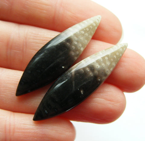 Fossil Palm Root Marquise Cabs - Matching Pair