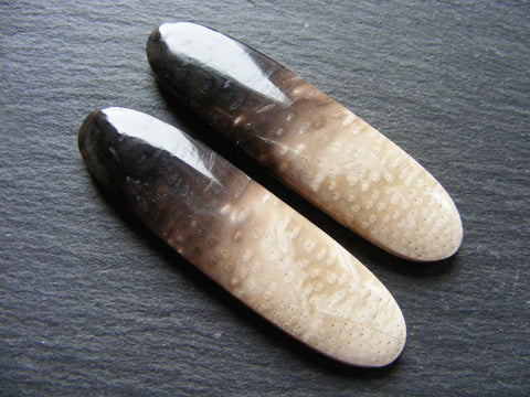 Fossil Palm Root Fancy Cabs - Matching Pair