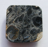 Fossil Palm Root Jasper Square Cab