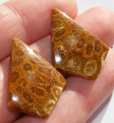 Fossil Coral Matched Pair Fancy Cabochon