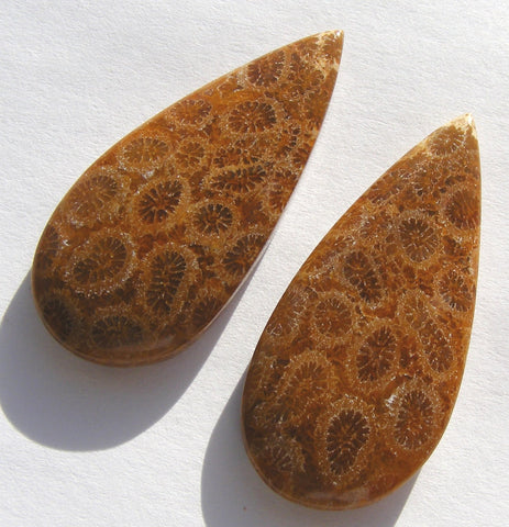 Fossil Coral Matched Pair Pear Cabochon