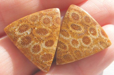 Fossil Coral Matched Pair Triangle Cabochon