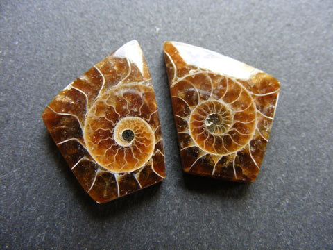 Ammonite Fancy Cabs - Matching Pair