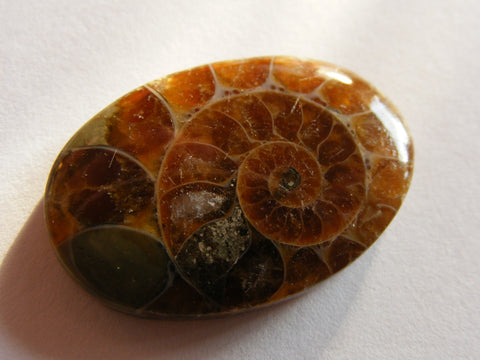 Ammonite Oval Cab