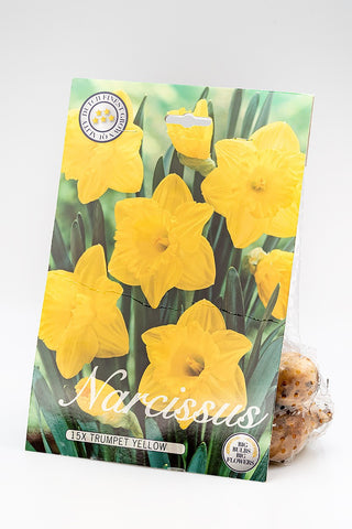 "Blumenzwiebel ""Narcissus Trumpet Yellow"""