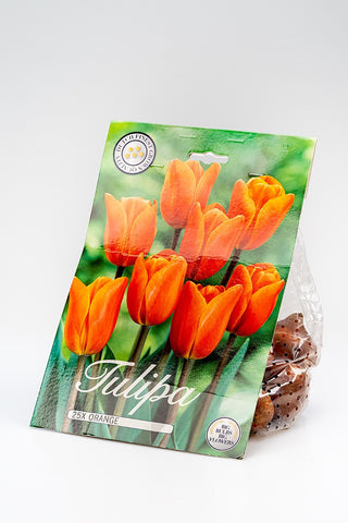 "Tulpenzwiebel ""Orange"""