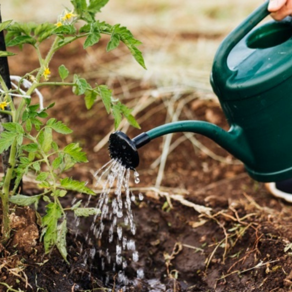 Watering your compost
