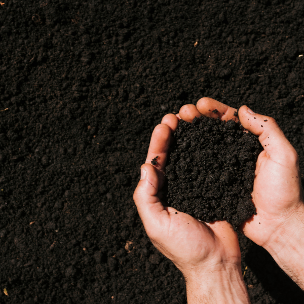 Why should you compost?