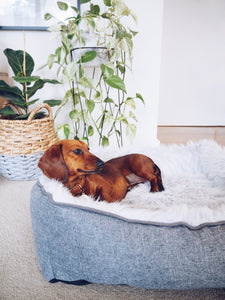 Modern Dream Dog Bed