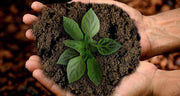 Grow - Organic Fertiliser