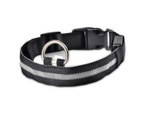 Nylon LED Dog Collar Offer