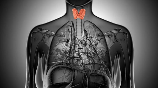 3 Thyroid Facts You Need to Know