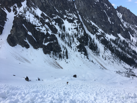 Remote Medical Training Instructor and rescue technician J. Manning searches a wet slid avalanche debris field for missing climbers on Mount Stuart in Mid-May 2017. Photo C Thompson